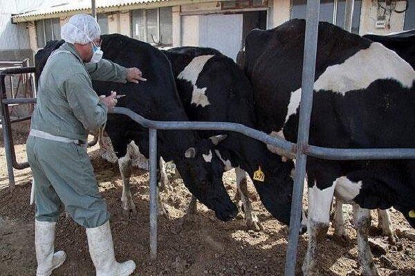 مجتمع شیر و گوشت «سیرک» به کجا رسید؟