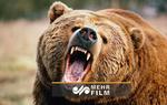 رهاسازی توله خرس در طبیعت جنگلهای خداآفرین