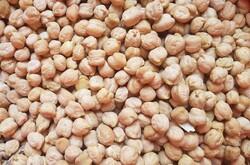 کشت انتظاری نخود در سطح ۲۵۰۰ هکتار از اراضی کشاورزی لرستان