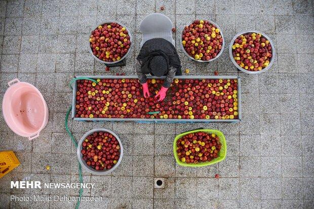 سیب کی نذر اور کورونا کے مریضوں کو سیب کا جوس پلانے کی مہم