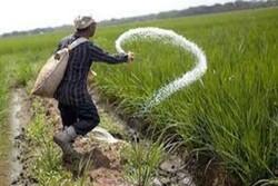 کشاورزان توان خرید کود فسفاته را ندارند