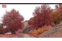 İran'da büyüleyici sonbahar görüntüleri