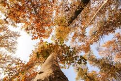 شمالی خراسان میں موسم خزاں کے شاندار جلوے