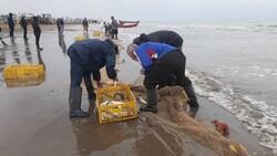 صید ۱۳۱۱ تن ماهی استخوانی از دریای خزر / کاهش ۲۱ درصدی نسبت به ۹۸