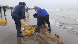۴۹۰ میلیارد برای ساخت بنادر جدید ماهیگیری در جنوب اختصاص یافت