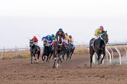 Iran to coop. with regional countries in horse racing