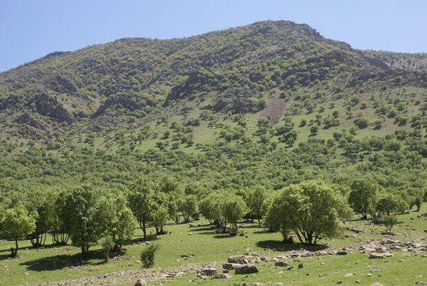 تشدید اقدامات حفاظت از منابع طبیعی کشور