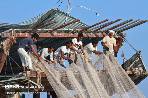 Shrimp harvest near Qeshm Island