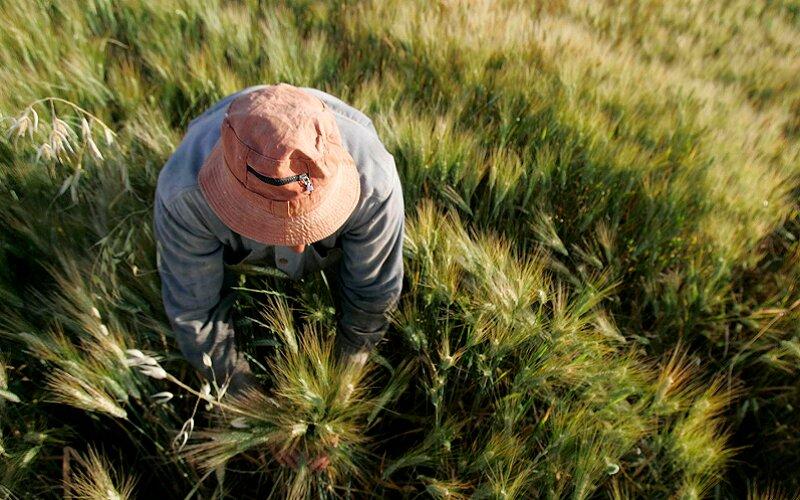 کشاورزی حفاظتی و تناوب کشت در اولویت زارعین استان اردبیل است