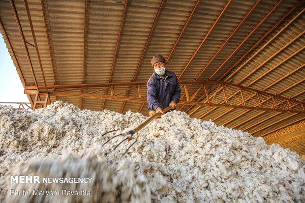 کارخانه پنبه پاک کنی در مانه و سملقان خراسان شمالی