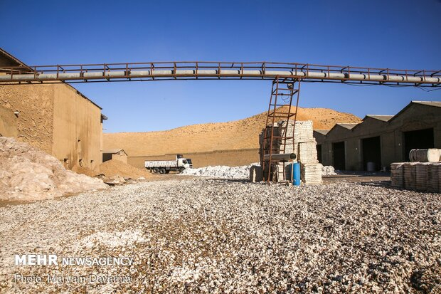 Traditional cotton harvest in North Khorasan province