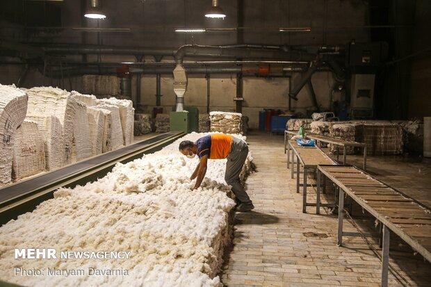 انتقل پنبه ها به کارخانه های نخ ریسی