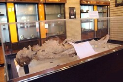 جسد مومیایی شده یزد ثبت ملی شد