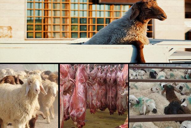 معادله قاچاق دام در قطب دامپروری/از گرانی گوشت تا ضعف زیرساختها