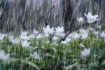 سامانه بارشی نسبتاً شدیدی استان بوشهر را فرا میگیرد