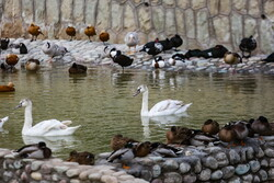 First bird garden in Qom inaugurated on Saturday
