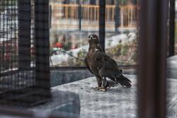 باغی ۴۰۰۰ متری در همدان که پناهگاه پرندگان شد