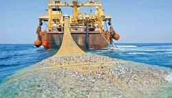 شناور غیر مجاز صید ترال در بندر جاسک توقیف شد