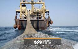 توقیف شناور غیر مجاز صید ترال