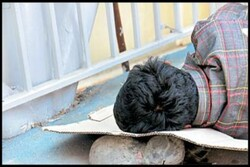 فعالیت ۷ مرکز سرپناه شبانه بهزیستی برای افراد بیخانمان در مشهد