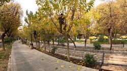 درختان فضای سبز شهری اراک مشکلی در حوزه آفات نباتی ندارند
