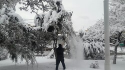 شهروندان در برف تکانی درختان همکاری کنند/ آماده باش ۲۰۰ نیروی خدمات شهری اردبیل
