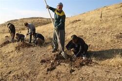 ۹۰۰ هزار اصله نهال در کردستان غرس میشود
