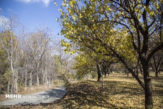 Astonishing scenery of autumn in Sanandaj