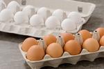 کاهش شدید قیمت تخم مرغ درب مرغداری/ مسئولان جواب تلفن نمی دهند!