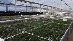 تجارت محصولات گیاهی بدون وقفه در جریان است