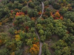 اقدامات حفاظتی در جنگل های هیرکانی تشدید می شود