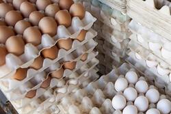 تخم مرغهای فلهای کاملاً بهداشتی هستند