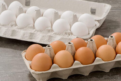 مرغداران نمیدانند تخم مرغ را به چه قیمتی عرضه کنند!/ ذرت ٧٠٠٠ تومان شد
