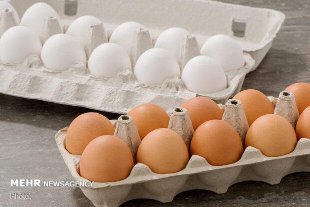 صادرات تخم مرغ متوقف است/ با کمبود تولید مواجهایم
