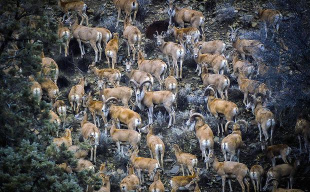 غفلت از گنجینههای زیست محیطی هیرکان/اکوتوریسم گلستان متولی ندارد