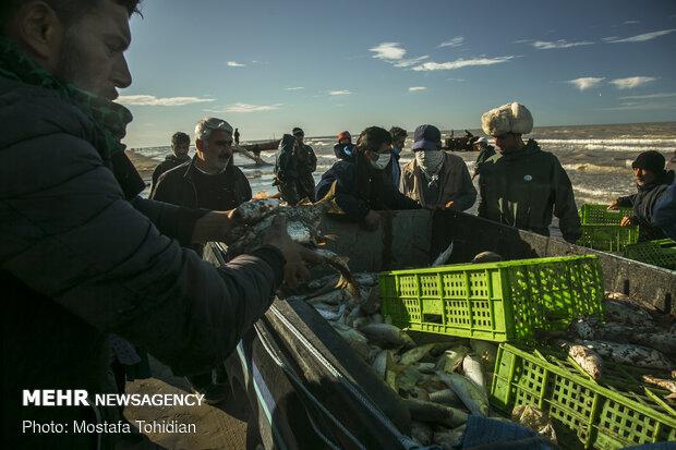 Traditional trawling on Caspian coast of Iran