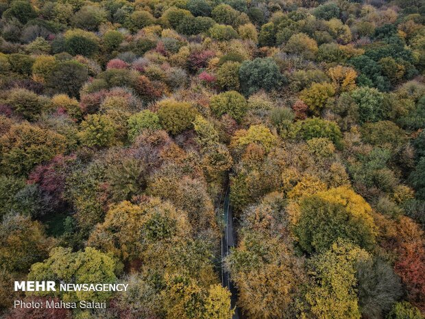 Autumn of a thousand colors in northern Golestan prov.