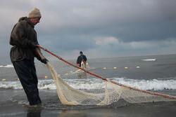 ۱۱ هزار تن ماهی استخوانی در دریای خزر صید شد