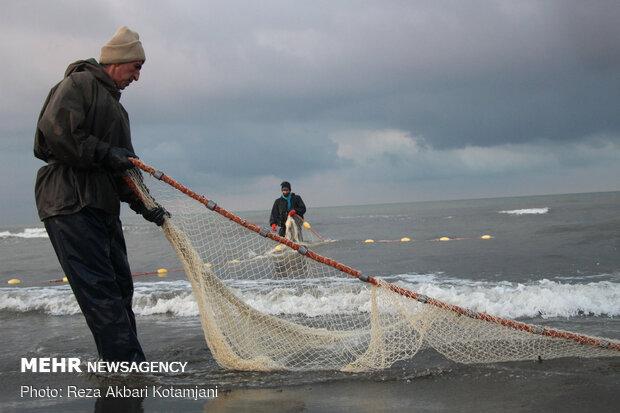 11 هزار تن ماهی استخوانی در دریای خزر صید شد