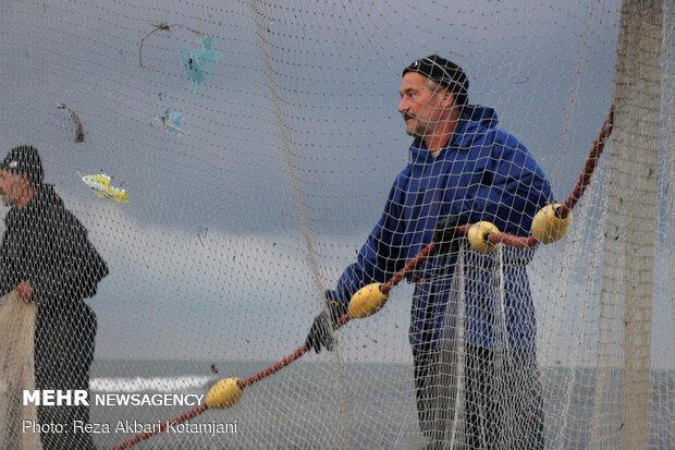 Cast-net fishing in Gilan prov.