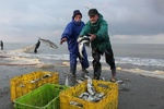 روایتی تلخ از دریای شمال؛ دلِ پُر و دستِ خالی مرد ماهیگیر!