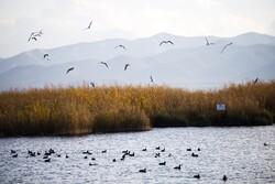 ساخت اولین برج پرنده نگری کردستان در دریاچه زریبار مریوان