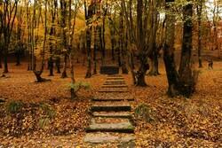 İran'da gezilecek yerler: Elengdere Ormanı