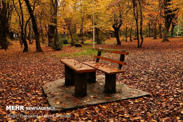 Beautiful sceneries of late autumn in Alangdareh Forest Park