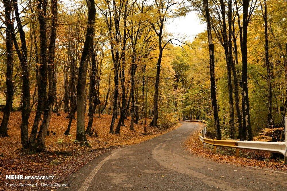 وابستگی معیشت ۲۵درصد از جمعیت جهان به تولیدات اکوسیستمهای جنگلی