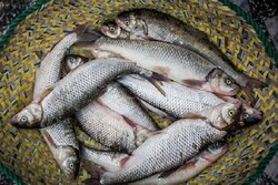 ساخت استخرهای کوچک پرورش ماهی گرمابی و سردابی در مناطق محروم