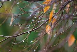 باران های بهاری در راه است