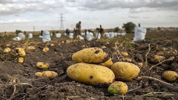 ایستگاه ملی تحقیقات سیبزمینی کشور در اردبیل راهاندازی شد