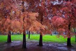 پاییز رویایی در گیلان
