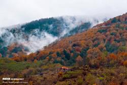 Last breath of Autumn in Gilan